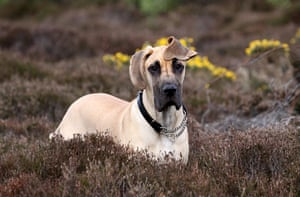 Dog photographer: Dog Portrait