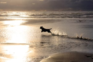 Dog photographer: Dogs at Play