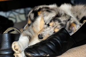 Dog photographer: Man's Best Friend