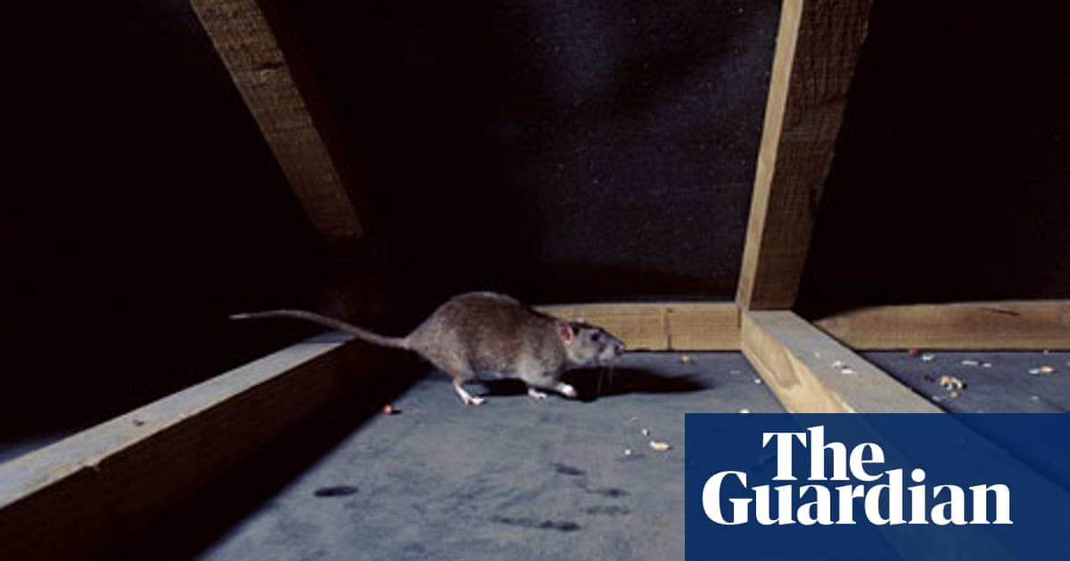 Getting rid of rats and bedbugs | Life and style | The Guardian