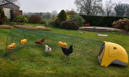 The Eglu chicken house