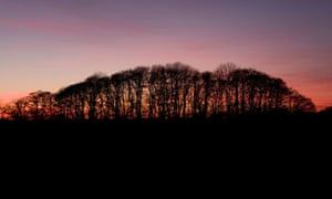 Sunset over woodland in Buckenham, Norfolk