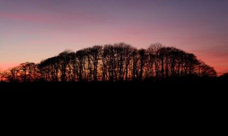 Sunset over woodland in Buckenham, Norfolk