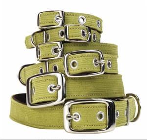 Xmas pets above 20: Corduroy dog collar