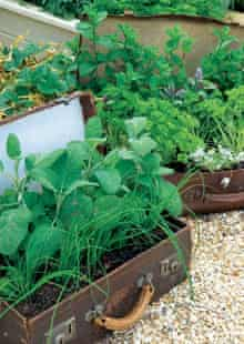 Herbs growing in suitcases