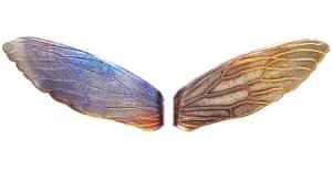 xmas-jewellery-over20: Cicada collar slides