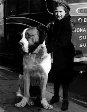 Vintage dogs: Crufts, 1950