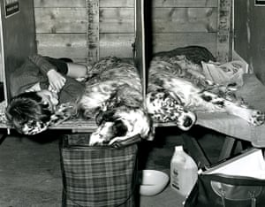 Vintage dogs: English setters at Crufts