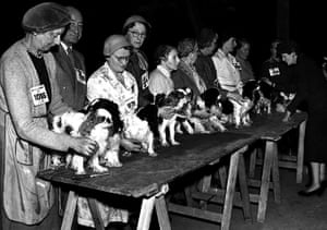Vintage dogs: Crufts, 1957