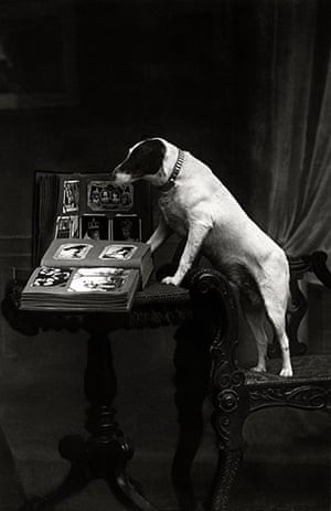 Vintage dogs: Dog and book