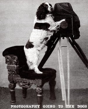 Vintage dogs: Photography going to the dogs