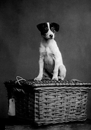 Vintage dogs: Dog on a basket