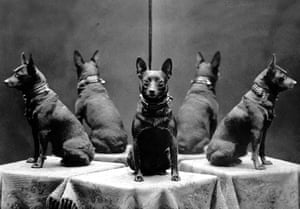 Vintage dogs: Dog in the mirror