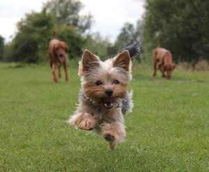 Dog photographer: Lucinda Seamons' Yorkshire Terrier