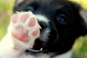 Dog photographer: Danielle Connor's picture of puppy with paw