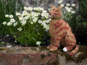 Knit your own cat: Best in Show: Knit your own ginger cat