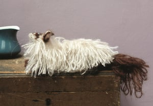 Knit your own cat: Best in Show: knit your own ragdoll cat