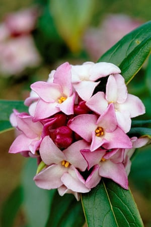 Winter Flowering Plants 10 Of The Best Life And Style The