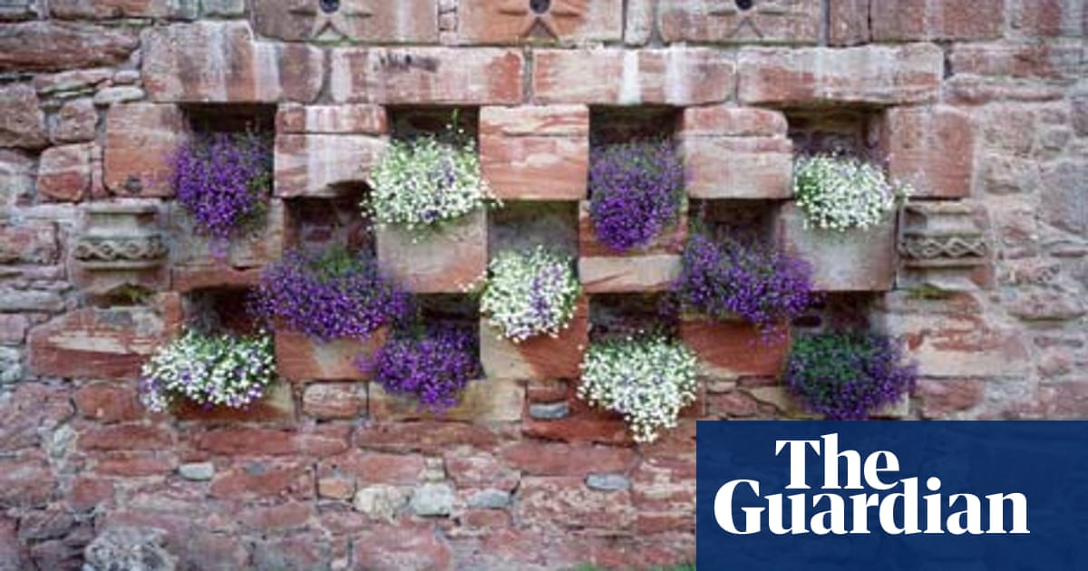 Lets Hear It For Lobelias Life And Style The Guardian