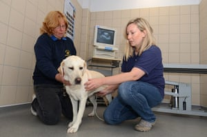 Guide dogs: National Breeding Centre