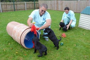 Guide dogs: Guide Dogs National Breeding Centre