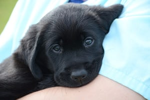 Guide dogs: Dog welfare experts