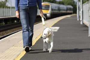 Guide dogs: Volunteer puppy walkers