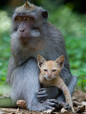 Unlikely animals friends: The macaque and the cat