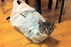 Best catcessory: Gypsy