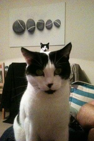 Best catcessory: Rocky