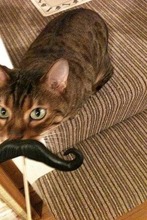 Best catcessory: Izzy