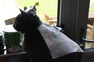 Best catcessory: Jasper