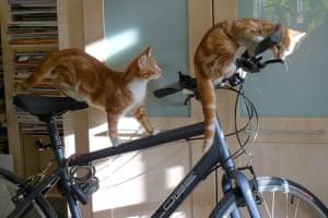 Catrobatics: Mac and his brother Tim