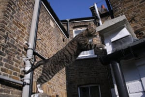Catrobatics: Tom Downer