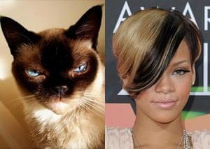 Cat lookalikes: Lookalike cat: Boni and Rihanna