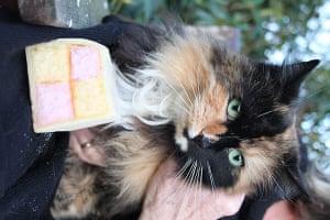 Cat lookalikes: Battenburg cat