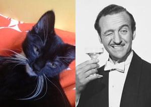 Cat lookalikes: Lookalike cat: Don Gato versus David Niven