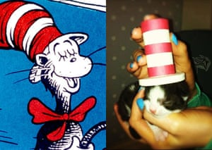 Cat lookalikes: Cat lookalike: Cat in the hat
