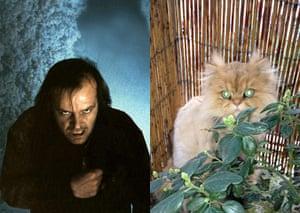 Cat lookalikes: Cat lookalikes: Mungo as Jack Nicholson