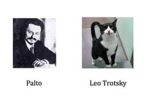 Cat lookalikes: Lookalike cat: The General Palto versus Leo Trotsky
