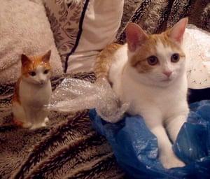Cat lookalikes: Lookalike cat: Ziggy Stardust and her porcelain doppelgänger