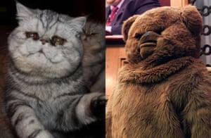 Cat lookalikes: Lookalike cat: Asparagus versus Bungle