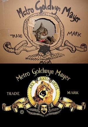 Cat lookalikes: Cat lookalike: MGM versus Hobbes