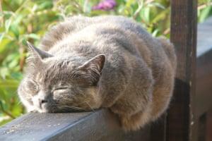 Sleeping beauty: Miles