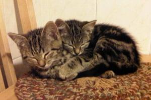 Sleeping beauty: Fuzz and Kit