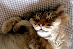 Sleeping beauty: Marvin Jason Ross