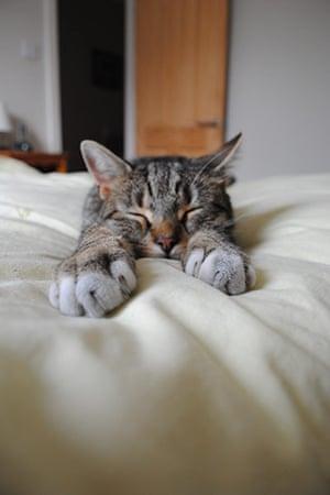Sleeping beauty: Stereo