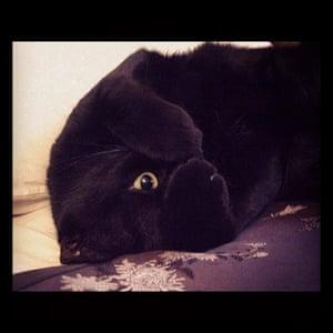 Cat cutest: Cutest cat: Rhymney