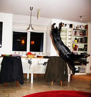 Catrobatics: Catrobatics: Hibou catching green beans