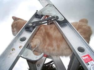 Catrobatics: Catrobatics: Ruben